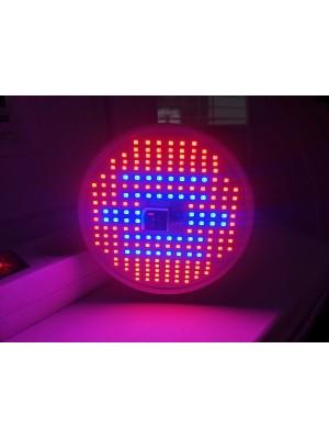 BASIC LED GROW žiarovka na všetky rastliny s ovládačom na stmievanie a načasovanie, ružovo-modrá, 12W, E27, SMD 2835