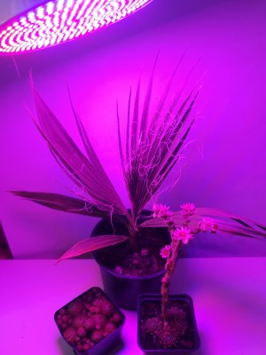 BASIC LED GROW žiarovka na všetky rastliny, 12W, E27, fialová, SMD 2835