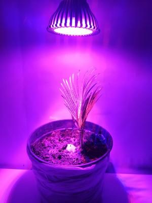PROFI LED GROW žiarovka na všetky rastliny 7W, HB-GS7W, E27, ružovo-modrá, High-power+