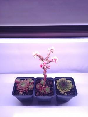 120 cm - LED GROW úsporná trubica pre rast rastlín, 18W, plné spektrum slabo-ružová