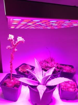 PROFI LED GROW panel pre všetky rastliny, ružová, 45W, 230V