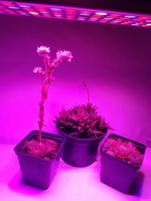 PROFI LED GROW panel pre všetky rastliny, ružová, 25W, 230V