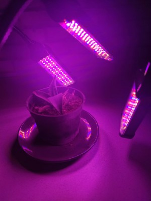 PROFI LED GROW trojramenná lampa so zabudovaným časovačom a stmievačom na všetky rastliny, 20W – červená-modrá-sunlight